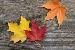 Первоначально листья осени Стоковые Изображения