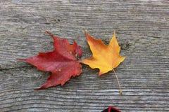Первоначально листья осени Стоковая Фотография RF