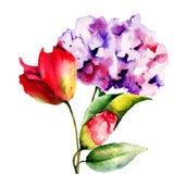 Первоначально цветки лета Стоковая Фотография RF