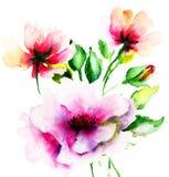 Первоначально цветки лета Стоковые Фото