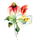 Первоначально цветки лета Стоковое Изображение RF