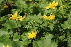 Первоцветы весны стоковое изображение