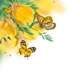 Первоцвет весны желтый Стоковое Изображение RF