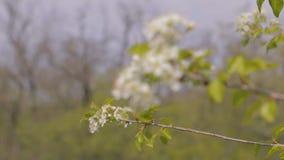 Первоцвет весны видеоматериал