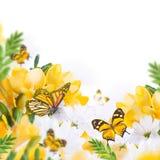 Первоцвет и бабочка весны желтые стоковые изображения