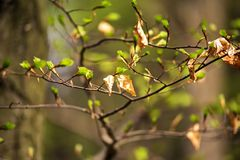 Первые весна и старые gentle листья Стоковое Фото
