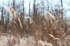 Первые заморозки в поле Стоковые Фото