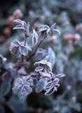 первые заморозки Стоковое Изображение RF