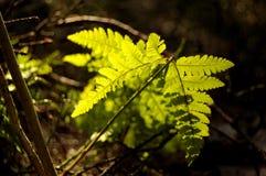 Первые зеленые цвета в ctitypark Стоковая Фотография RF