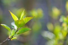 первые зеленые цвета Стоковые Изображения RF