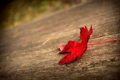 первые листья Стоковое фото RF