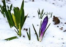 Первые нежные цветки весны Стоковая Фотография RF