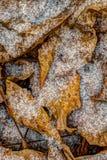 Первые снежинки Стоковая Фотография RF