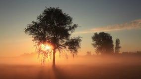 Первые лучи солнца светят через туман сток-видео