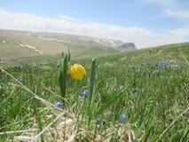 Первые цветки весны в горах стоковая фотография rf