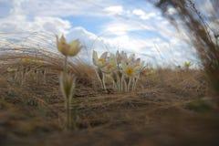 Первые цветки весны поля стоковое фото rf