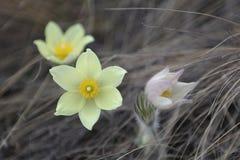 Первые цветки весны поля стоковое изображение rf