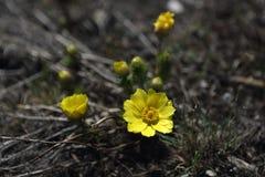 Первые цветки весны поля стоковые изображения