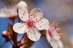 первые цветки Стоковое фото RF
