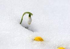 первые цветки Стоковое Изображение RF