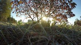 Первый белый заморозок на траве сада в солнечном свете осени и утра Timelapse 4K акции видеоматериалы
