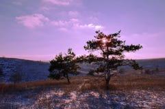 Первый день зимы покрытые Снег деревья в холмах снега f стоковая фотография rf