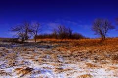 Первый день зимы покрытые Снег деревья в холмах снега f стоковое фото rf