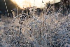 Первый заморозок в лесе 2017 горы Стоковые Изображения