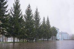 Первый заморозок осенью стоковая фотография