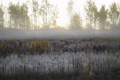 Первый заморозок, туман в утре осени в поле Стоковое Фото