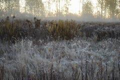 Первый заморозок, туман в утре осени в поле Стоковые Фото