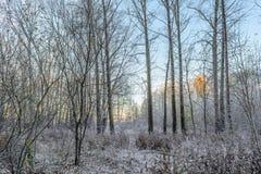 Первый заморозок Стоковая Фотография