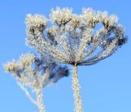 Первый заморозок Стоковое Фото