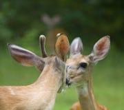 первый поцелуй Стоковое фото RF