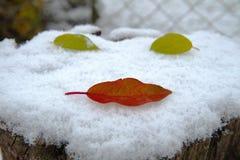 Первый поцелуй, первый снег Стоковые Фото