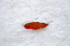 Первый поцелуй, первый снег Стоковые Изображения