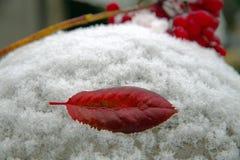Первый поцелуй, первый снег Стоковые Фотографии RF