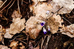 Первый свежий голубой фиолет в лесе Стоковое Изображение