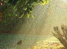 Первый свет утра стоковые изображения rf