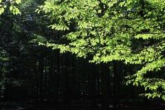 Первый свет Стоковые Фотографии RF