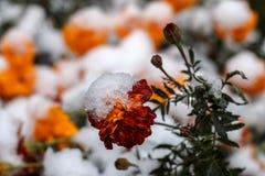 Первый снег в октябре Стоковые Фотографии RF