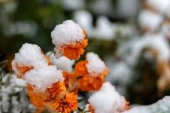 Первый снег в октябре Стоковые Фото