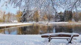 Первый снег в парке города с утками акции видеоматериалы
