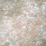 Первый снег в саде Стоковые Изображения RF