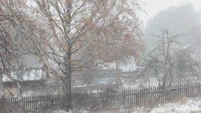 первый снежок Береза с листьями желтого цвета в вьюге сток-видео