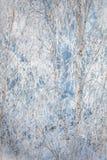 Первый снежок в парке зима температуры России ландшафта 33c января ural Стоковая Фотография