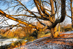 Первый снежок в парке осени. Стоковое Изображение RF
