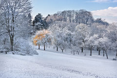 Первый снежок в парке. стоковое изображение rf