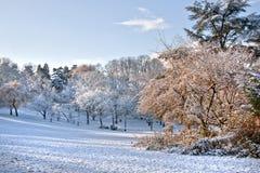 Первый снежок в парке. стоковая фотография