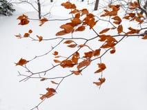 Первый снежок в парке. стоковое фото